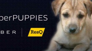 Uber Pune is deploying 'PuppyMobiles' in the city tomorrow to encourage 'pet adoption'