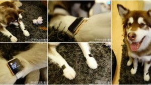Chinese billionaire heir buys two Apple Watch Edition worth Rs 20 lakhs for his dog, causes outrage on social media